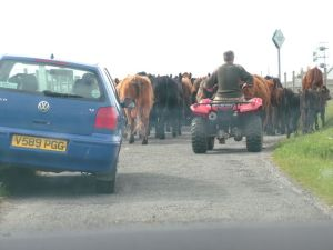 Photograph of Rush Hour on Tiree