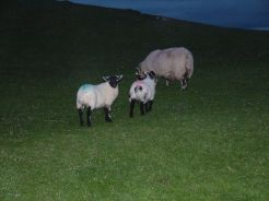Night Life on the Machair