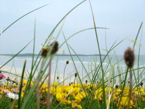 Tiree in Bloom