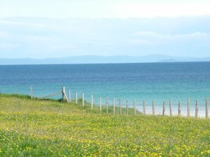 Photo of the Machair