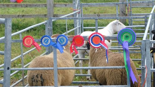 Winning Entries Tiree Show