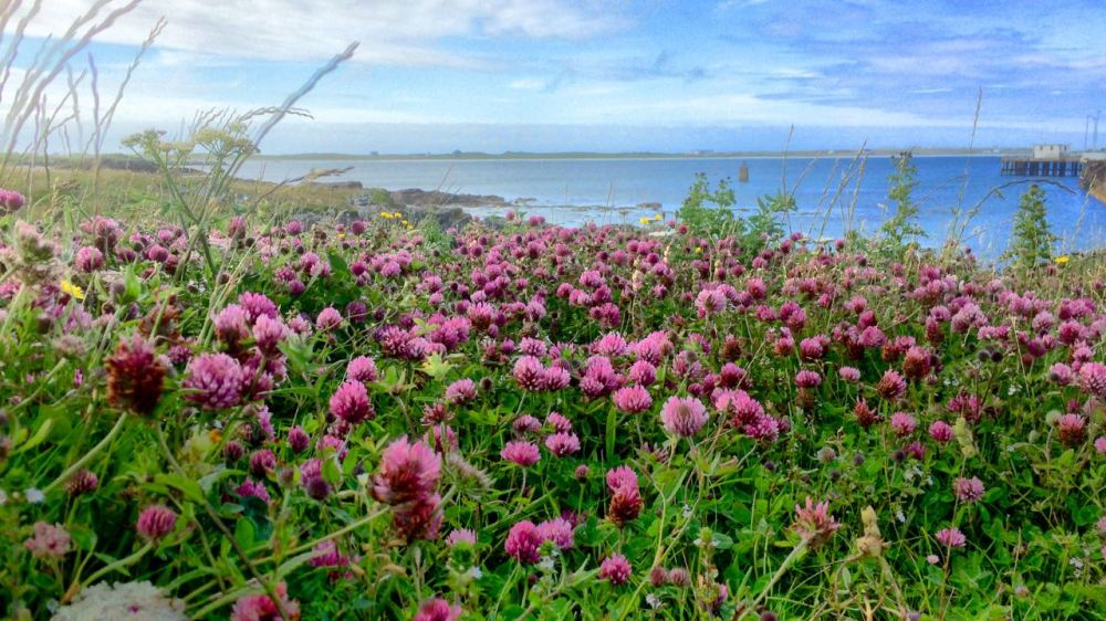 The wonderful garden by the pier, Scarinish