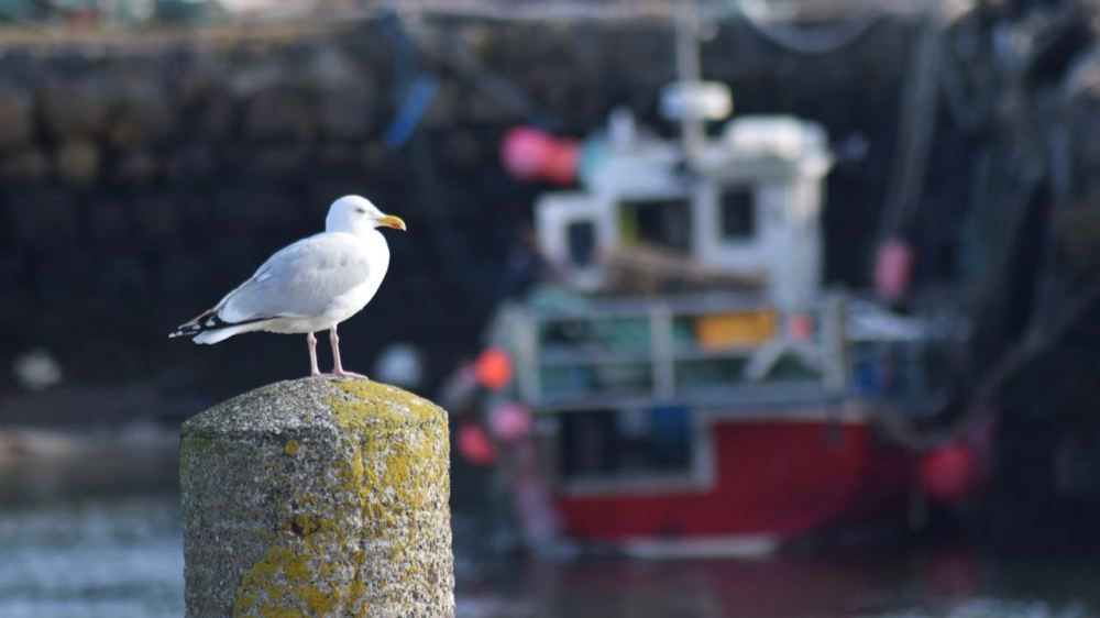 Surveying the Scene - Scarinish Harbour
