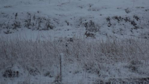 Haring about in the snow