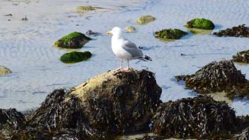 Gull down by the pier