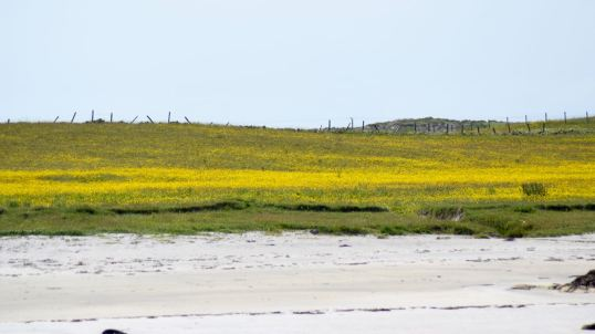 The white sand leading to Machair