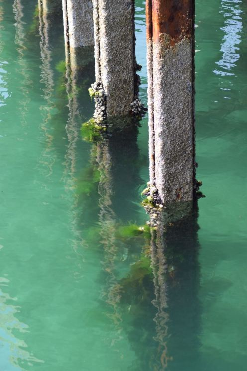 The Old Pier Legs