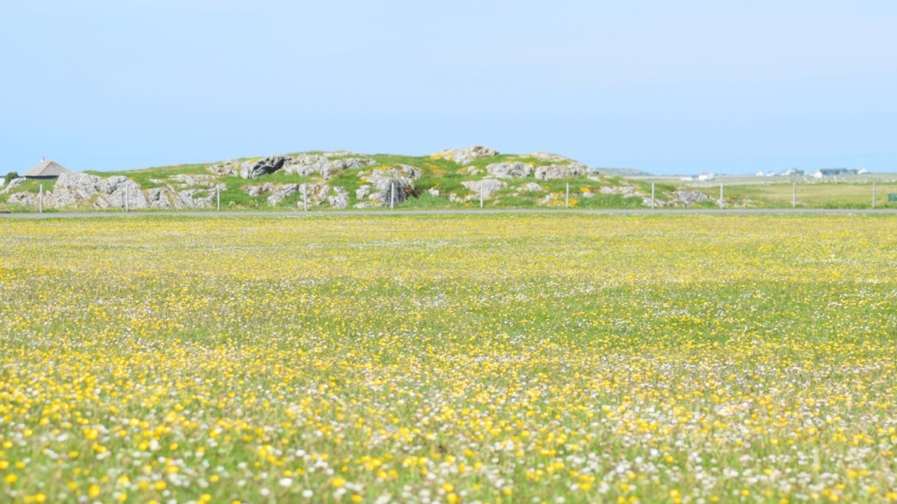 Tiree is a riot of colour - all over the island