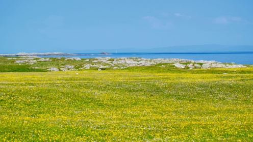 The Machair responds to the warmth of the sun