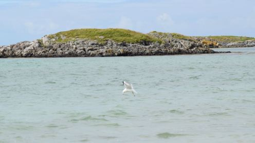 A gull that dives into the sea