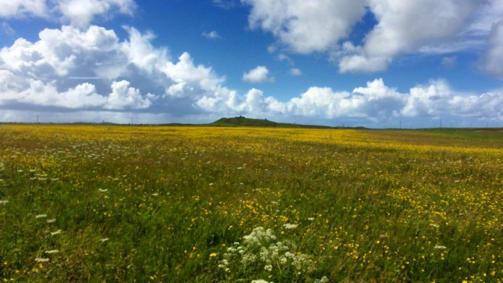 Blue skies and yellow fields