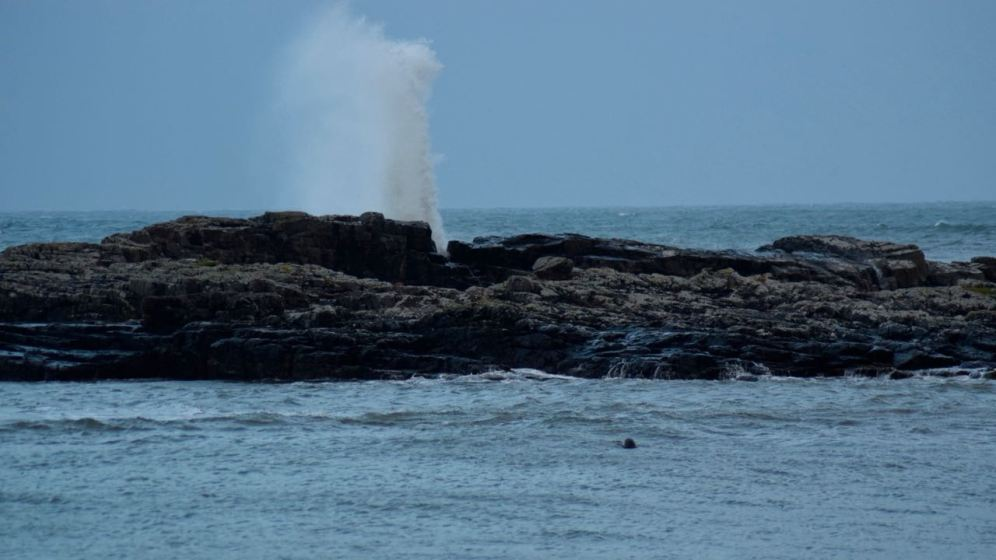 A seal and in the background a wave crashes on the rocks