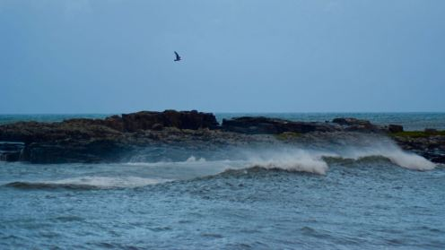A gull and spindrift