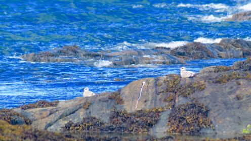 Gulls resting on the rocks
