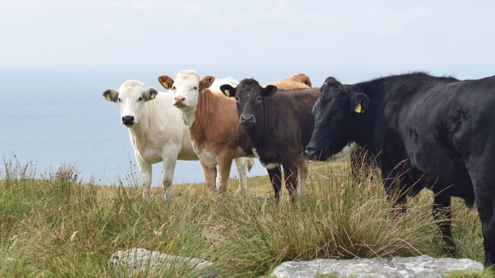 On Ben Hynish we came across the highest Stock on the island
