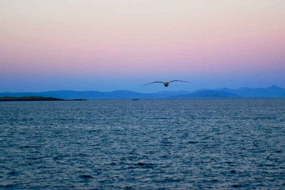Heading east, a gull sweeps over the bay