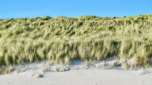 Wind blown sand, dune with Marram Grass and blue, blue sky