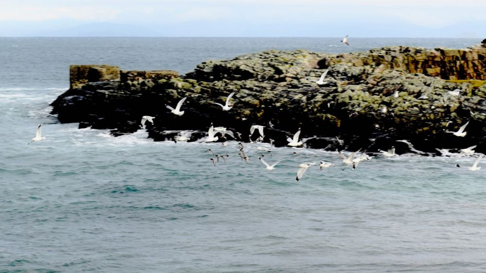 Sea birds enjoying the delights of high tide