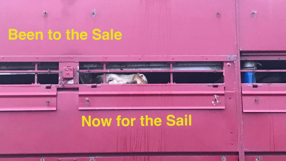 Been to the sale - now for the sail