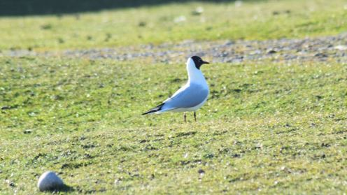 Birds of Tiree