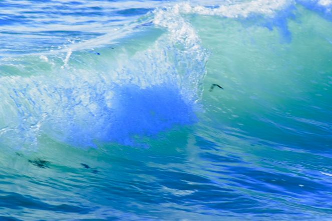 Swell Conditions
