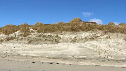 Dune protecting the Reef