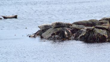 West Hynish Seal Colony