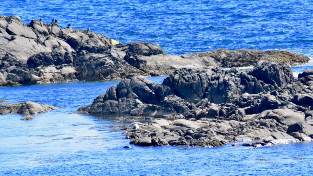 Skerry, Shags and Seals
