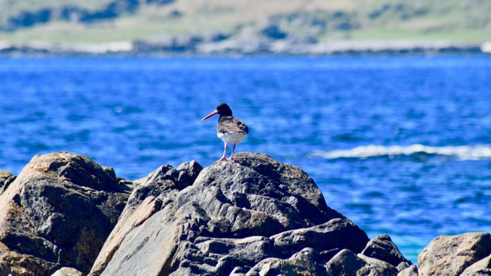 Oyster Catcher on the rocks surrounding the secret beach