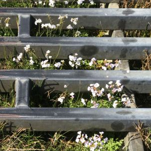 Even growing in cattle grids