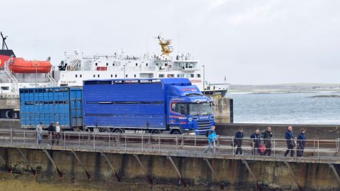 It's Sale Day and the Livestock Trucks arrive by the ferry