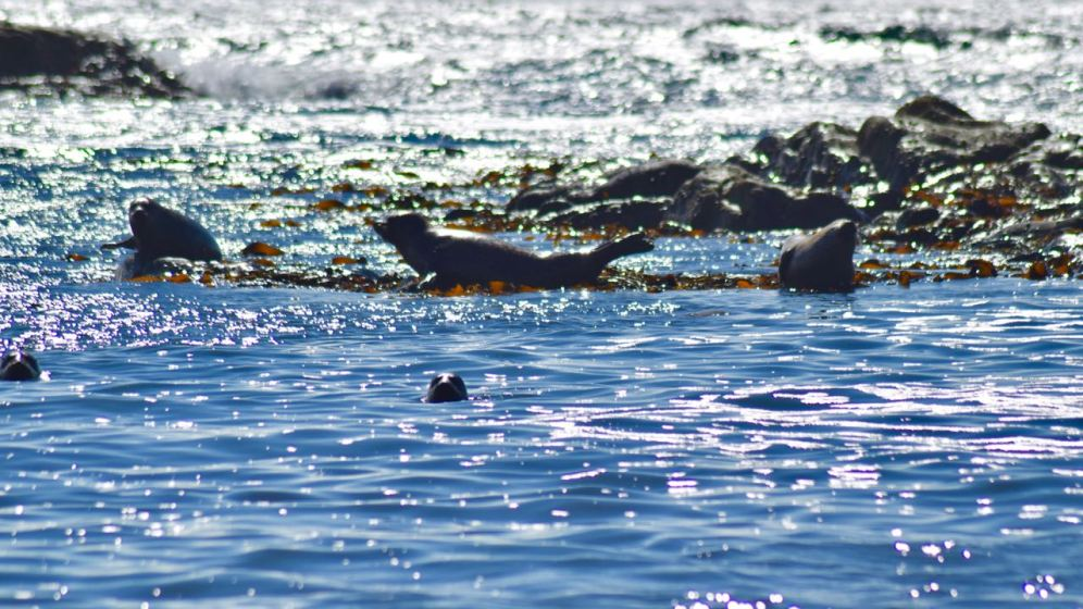 Seals in the sunshine