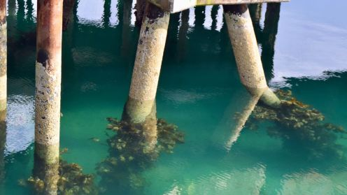 The clear water around the piles