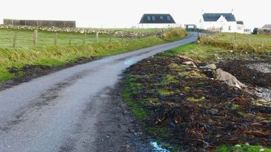 Seaweed and debris straddle the roadway