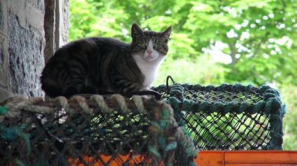 A cat sitting on top of a creel at the mid-harbour