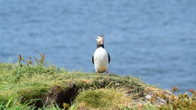 A Puffin on Lunga - an exceptional trip
